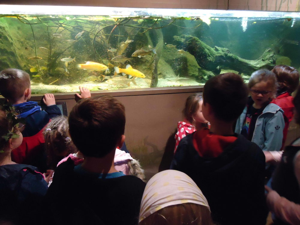 1 aquarium